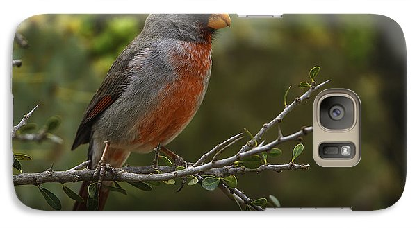 Pyrrhuloxia Portrait Galaxy S7 Case