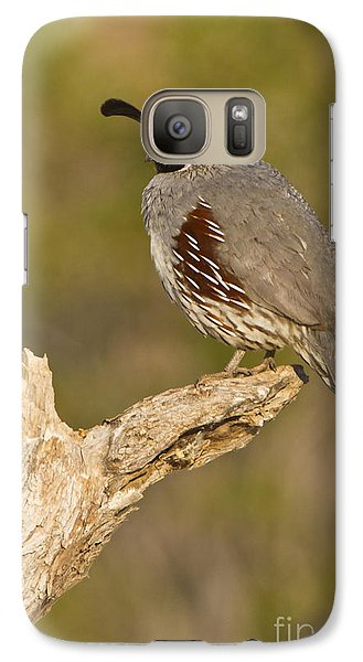 Galaxy Case featuring the photograph Quail On A Stick by Bryan Keil