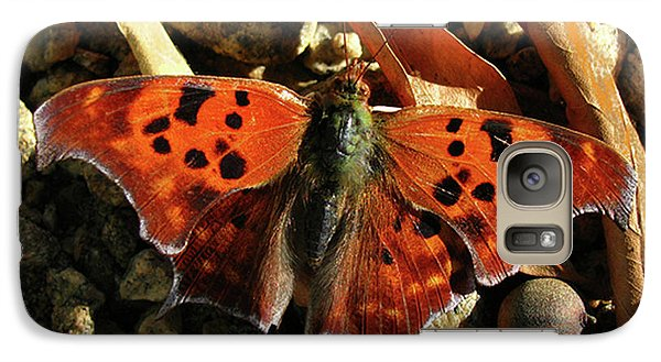 Galaxy Case featuring the photograph Question Mark Butterfly by Donna Brown