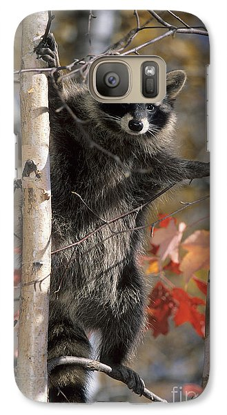 Galaxy Case featuring the photograph Racoon In Tree by Chris Scroggins