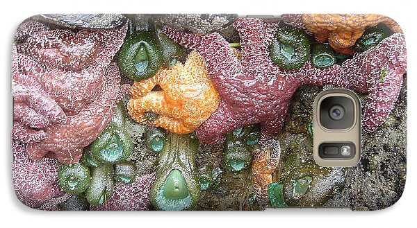 Galaxy Case featuring the photograph Rainbow Of Sea Creatures by Karen Molenaar Terrell