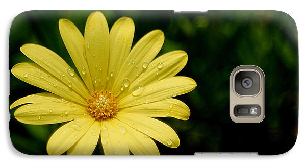 Galaxy Case featuring the photograph Raindrops And Daisy by Living Color Photography Lorraine Lynch