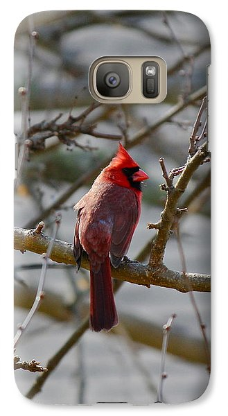 Galaxy Case featuring the photograph Red Cardinal by Amazing Jules