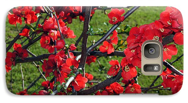 Galaxy Case featuring the painting Red Cherry  by Debra Crank