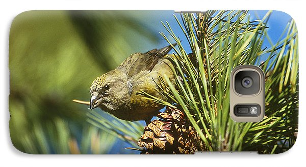 Red Crossbill Eating Cone Seeds Galaxy Case by Paul J. Fusco