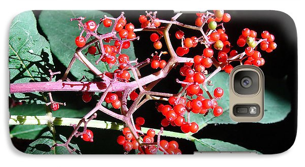 Galaxy Case featuring the photograph Red Elderberry by Cheryl Hoyle