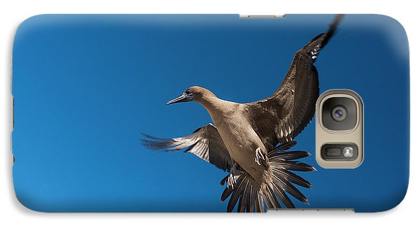 Red-footed Booby (sula Sula Websteri Galaxy S7 Case by Pete Oxford