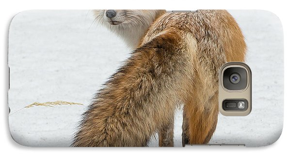 Galaxy Case featuring the photograph Red Fox Of Silver Gate by Yeates Photography