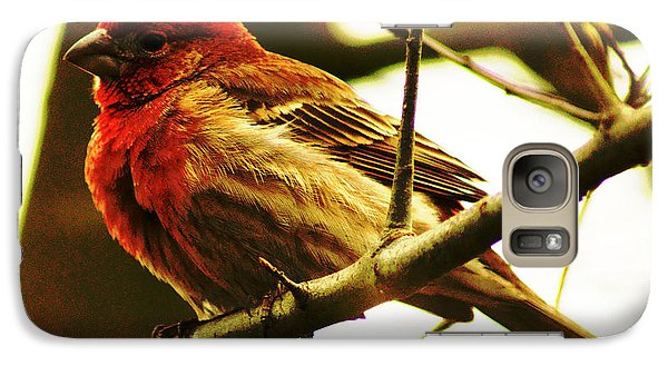 Galaxy Case featuring the photograph Red Headed House Finch by B Wayne Mullins