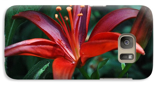 Galaxy Case featuring the photograph Red Lily by Kelly Nowak