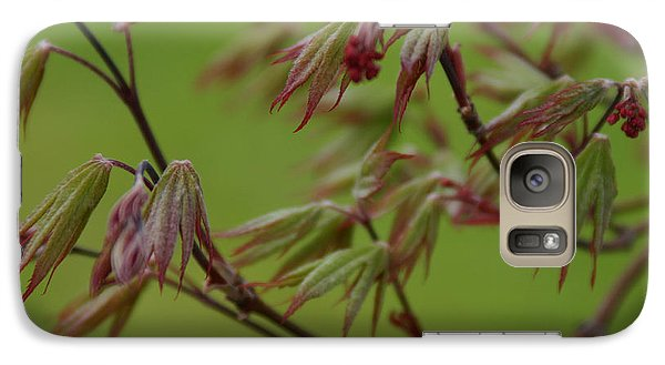 Galaxy Case featuring the photograph Red Maple by Kelly Hazel