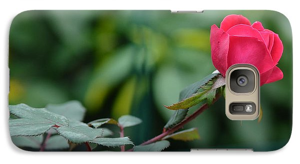 Galaxy Case featuring the photograph Red Rose I by Lisa Phillips