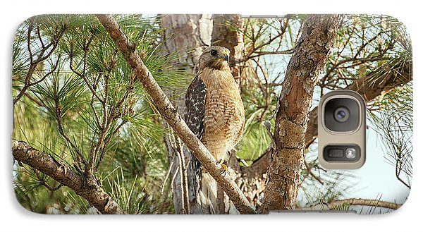 Galaxy Case featuring the photograph Red-shouldered Hawk by Zoe Ferrie