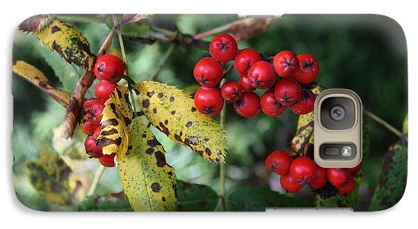 Galaxy Case featuring the photograph Red Summer Berries - Whistler by Amanda Holmes Tzafrir