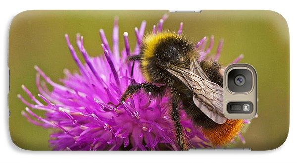Galaxy Case featuring the photograph Red Tail Bumble Bee by Paul Scoullar