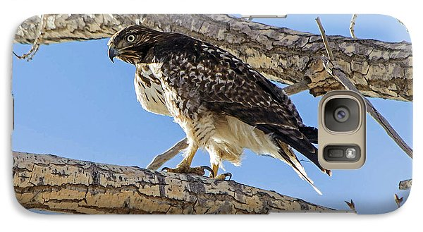 Galaxy Case featuring the photograph Red Tail Hawk In Cottonwood Tree by Stephen  Johnson