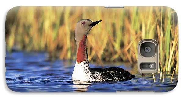 Red-throated Loon Galaxy S7 Case by Paul J. Fusco