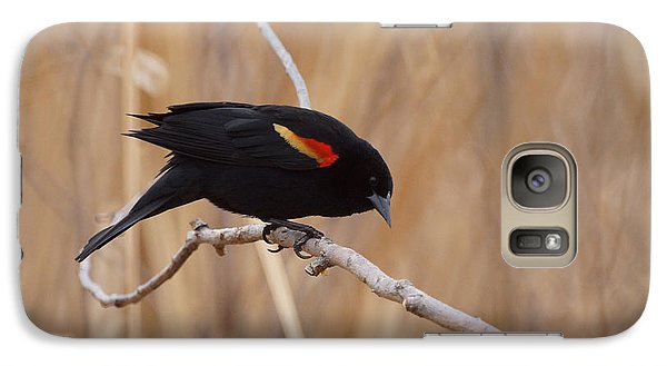 Red Winged Blackbird 1 Galaxy S7 Case