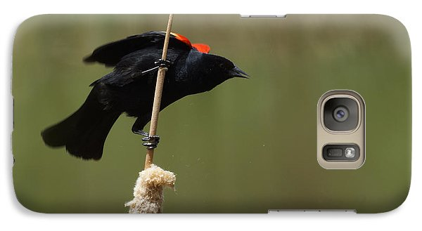 Red Winged Blackbird 3 Galaxy S7 Case