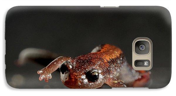 Salamanders Galaxy S7 Case - Redback Salamander Plethodon Cinereus by Aaron Ansarov