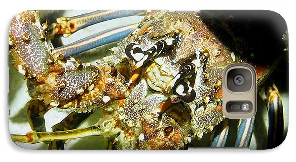 Galaxy Case featuring the photograph Reef Lobster Close Up Spotlight by Amy McDaniel