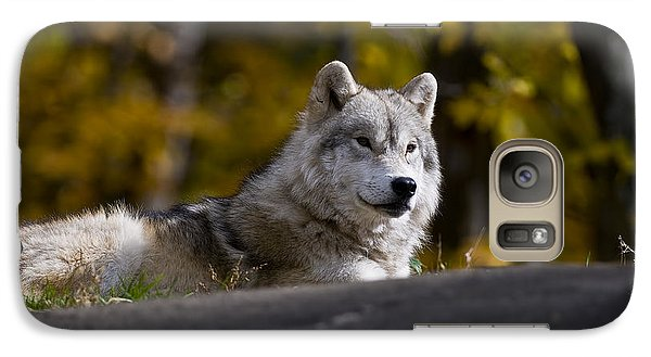 Galaxy Case featuring the photograph Resting Arctic Wolf On Rocks by Wolves Only