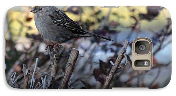 Galaxy Case featuring the photograph Resting Sparrow by Marjorie Imbeau