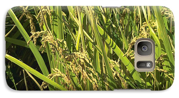 Galaxy Case featuring the photograph Rice by Rachel Mirror
