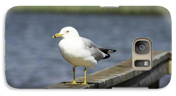 Galaxy Case featuring the photograph Ring-billed Gull by Alyce Taylor