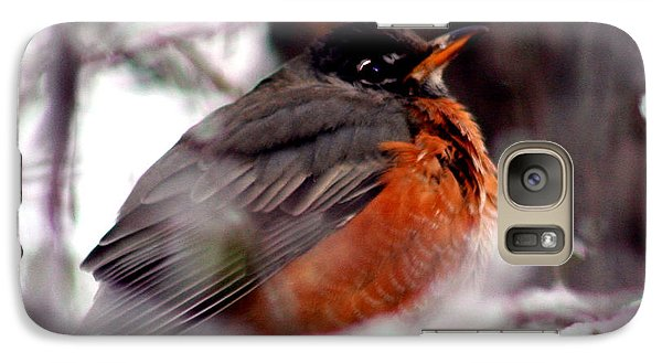 Galaxy Case featuring the photograph Robins' Patience by Lesa Fine