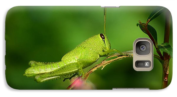 Galaxy Case featuring the photograph Rosemary Grasshopper - Instar Nymph by Kathy Baccari