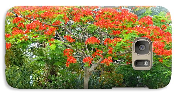 Galaxy Case featuring the photograph Royal Poinciana by Kay Gilley