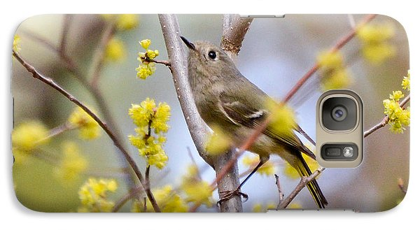 Galaxy Case featuring the photograph Ruby-crowned Kinglet by Kerri Farley