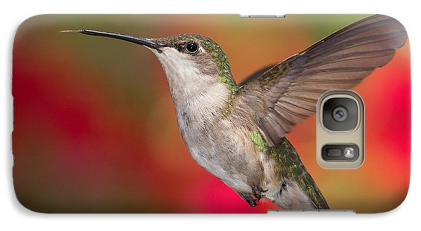 Ruby Throated Hummingbird Galaxy S7 Case