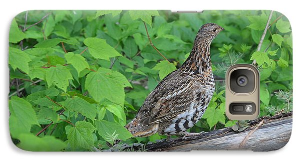 Galaxy Case featuring the photograph Ruffed Grouse by James Petersen
