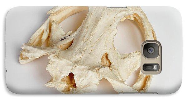 Salamanders Galaxy S7 Case - Salamander Skull Model by Ucl, Grant Museum Of Zoology