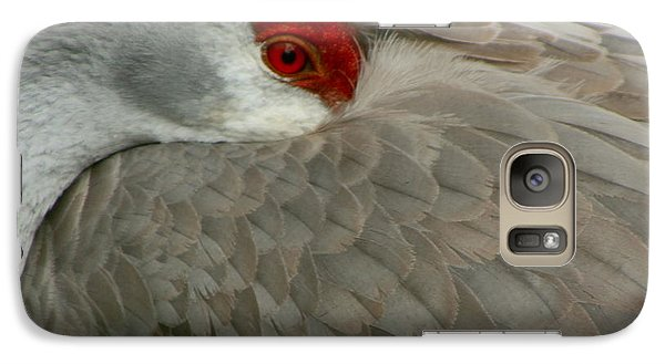 Galaxy Case featuring the photograph Sandhill Crane At Rest by Myrna Bradshaw