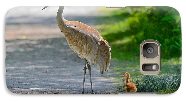 Galaxy Case featuring the photograph Sandhill Crane Colt by Kathy King