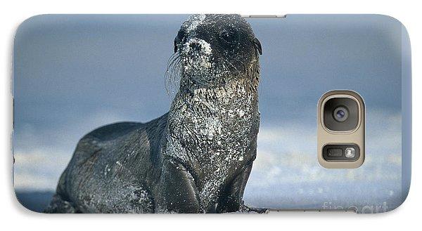 Galaxy Case featuring the photograph Sandy Sea Lion by Chris Scroggins