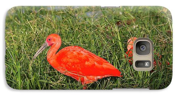 Ibis Galaxy S7 Case - Scarlet Ibis (eudocimus Ruber by Keren Su