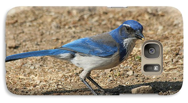 Galaxy Case featuring the photograph Scrub Jay by Bob and Jan Shriner