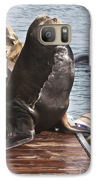Sea Lion-stout Galaxy Case by David Millenheft