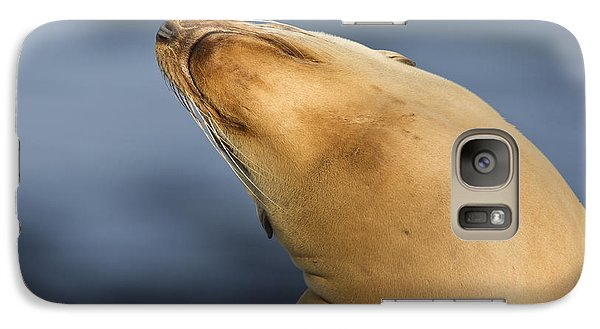 Galaxy Case featuring the photograph Sea Lion Stretch by Bryan Keil