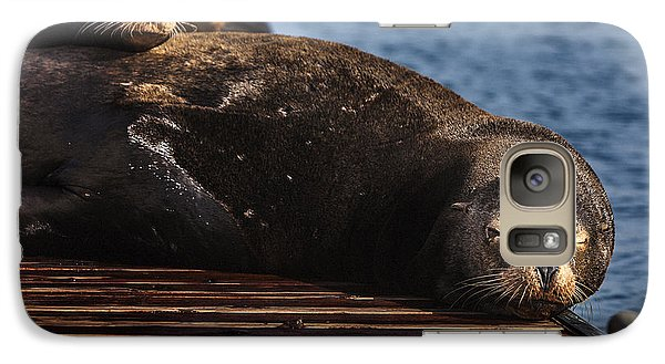 Sea Lions On The Dock Galaxy Case by David Millenheft