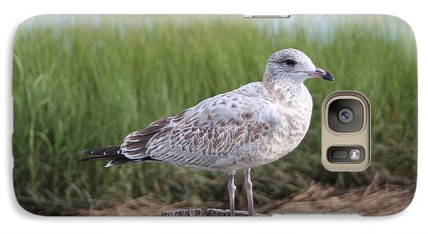 Galaxy Case featuring the photograph Seagull by Karen Silvestri