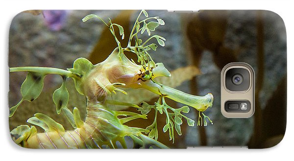 Galaxy Case featuring the photograph Seahorse by Mike Lee