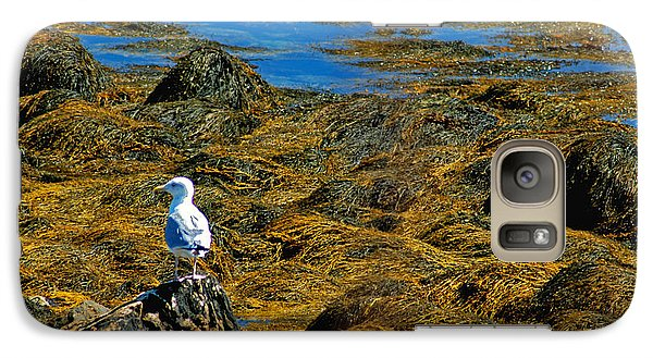 Galaxy Case featuring the photograph Sentinel Seagull by Nancy De Flon