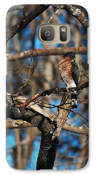 Galaxy Case featuring the photograph Sharp Shinned Hawk by Mim White