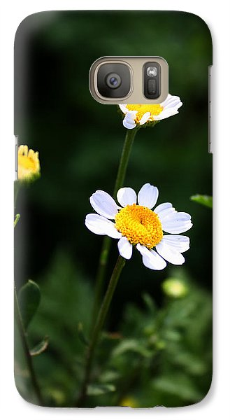 Galaxy Case featuring the photograph Shasta Daisies by Richard Stephen