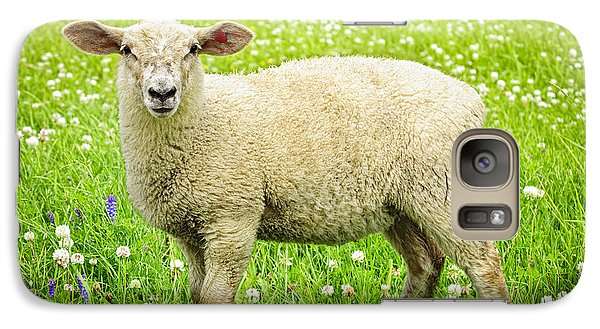 Sheep In Summer Meadow Galaxy S7 Case